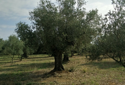 Inspiration among olive trees